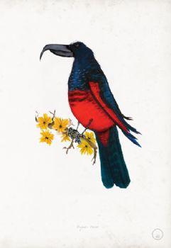 Pesquet's Parrot - artist signed print